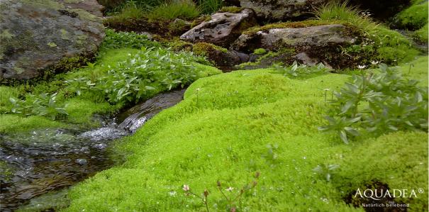 Aquadea quellwasserähnliches Wasser mit einem Wasserverwirbler