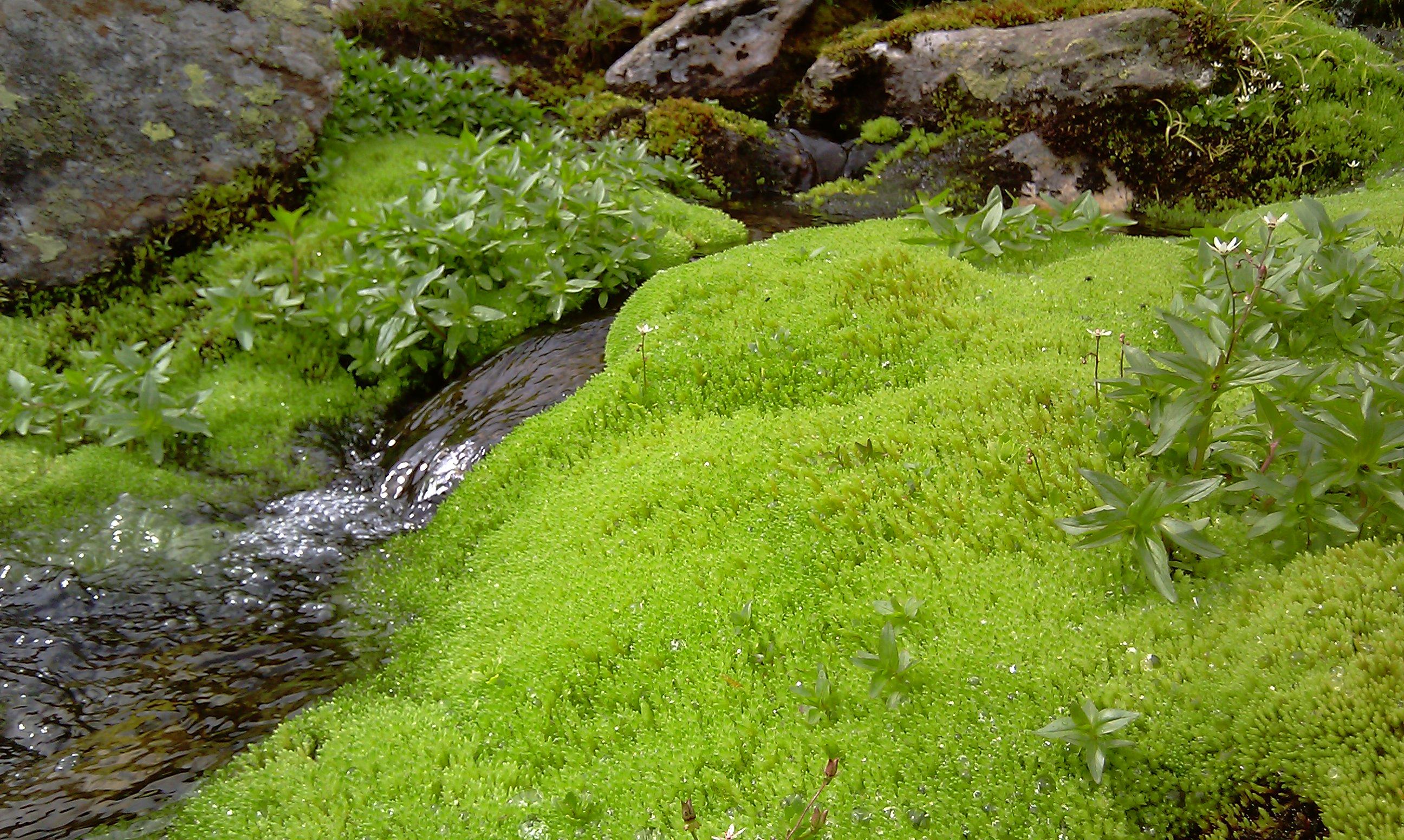 gewirbeltes Wasser - die Natur kapieren und kopieren