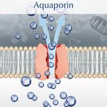Warum Trinkwasser mit Wirbeltechnik aufbereiten ?  Prof. Peter Agre und die Aquaporine.